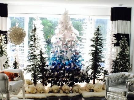 Christmas Grove 2013